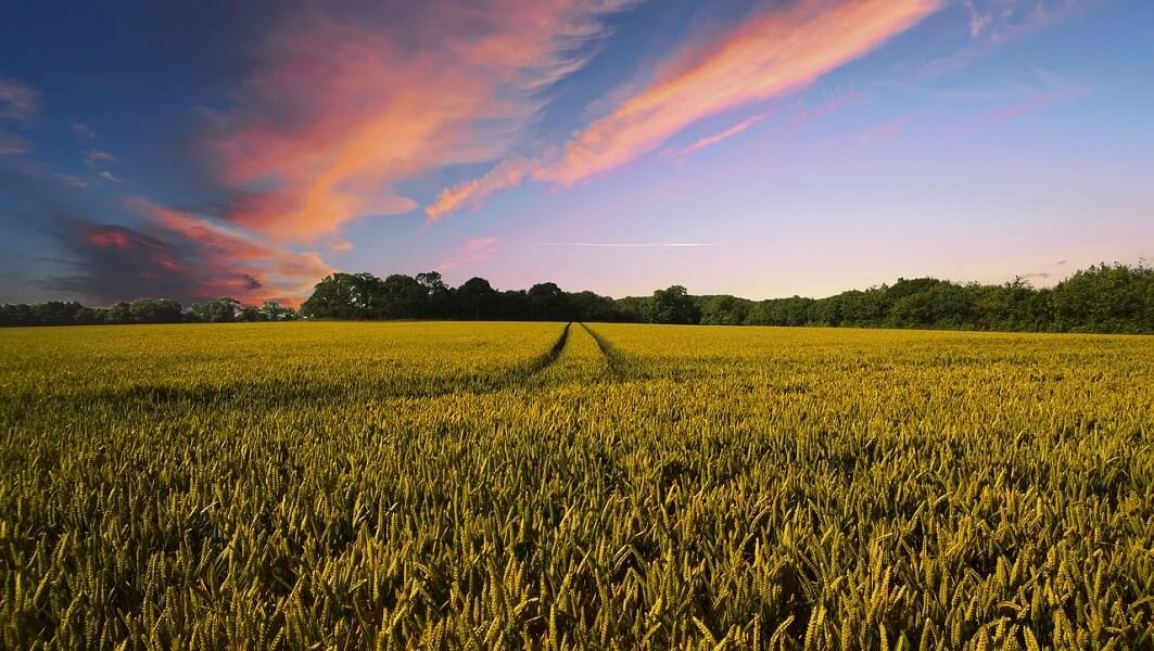 משק חקלאי